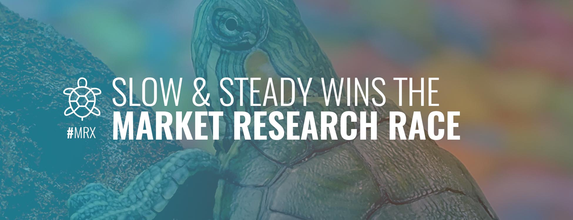 slow-and-steady-wins-the-race-market-research