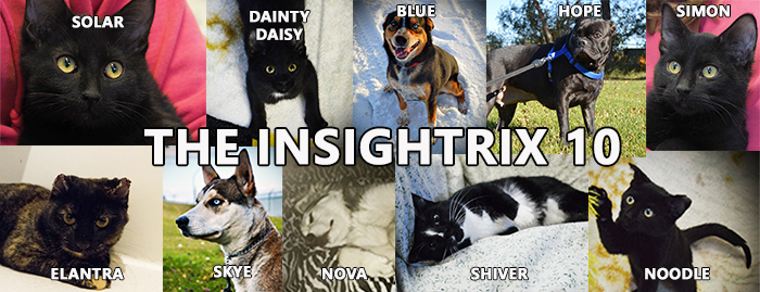 The Insighrix 10, Battlefords Humane Society, pet adoption